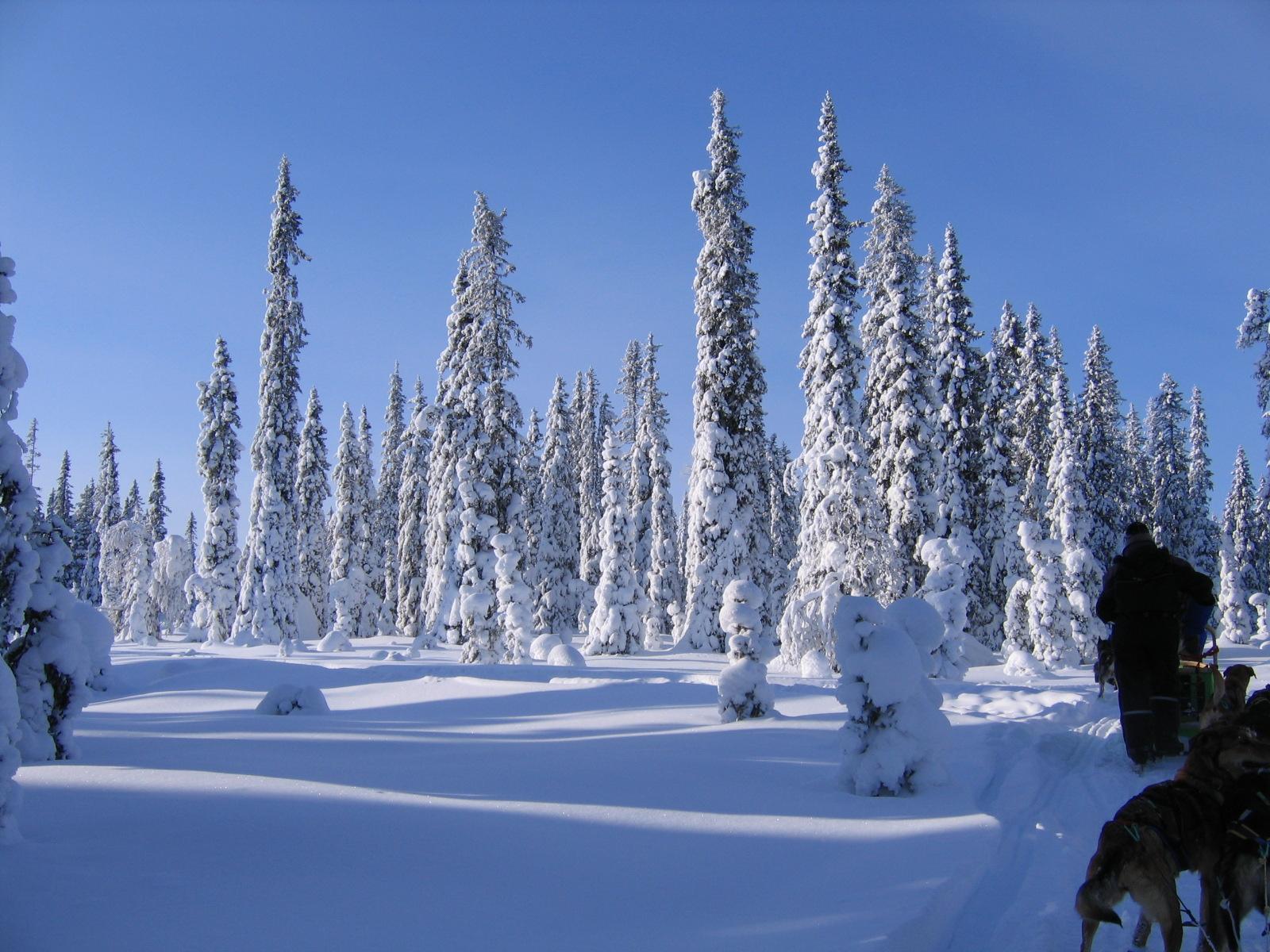 Weihnachten im Schnee - nordic holidays gmbh - Pressemitteilung