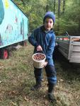 Insgesamt 590.500 Eicheln sammelten Helfer im Solling