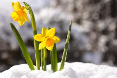 Winter trifft auf Frühling in den Allgäuer Hörnerdörfern