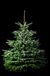 Der Familienbetrieb legt großen Wert auf hochwertige, formschöne Bäume