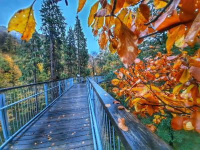 Baumwipfelpfad Harz Herbst 2020