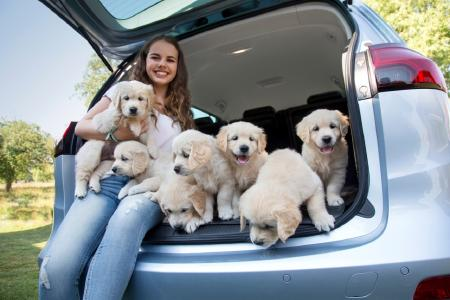 Practice makes puppy perfect: Puppies that travel in the Zafira from an early age are much better car-passengers when they grow up