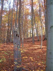 Herbststimmung im Nationalpark