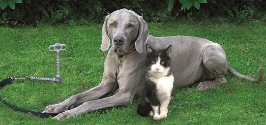 PetPeg Sicher Halt(er)ung für Hund Katze und andere Tiere