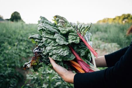alphabeet verhilft zu leckerem selbstangebautem Gemüse.