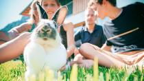 Außenhaltung von Kaninchen im Sommer