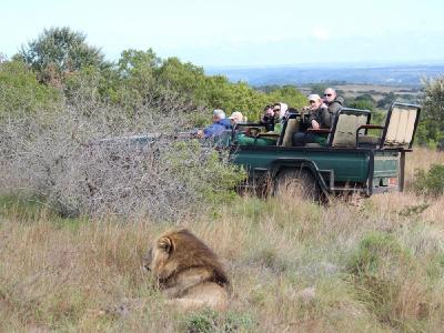 """Auf einer Safari in Südafrika können die """"Big Five"""" hautnah erlebt werden / Foto: BFS / Karawane Reisen"""