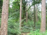 Bereits seit 30 Jahren entwickeln die Landesforsten im Rahmen des LÖWE-Programmes aus reinen Fichtenwäldern stabile Mischbestände / Foto: NLF