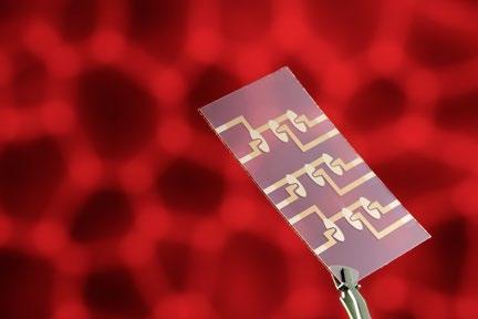 Mittels eines so genannten Multi-Elektrodenlayout können mehrere Zellproben parallel untersucht werden. Foto: obx-news/Fraunhofer EMFT/Bernd Müller