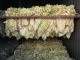 Tabak-Trocknung im landw. Betrieb