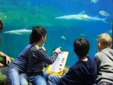 Kinder bei der Fischinventur