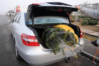 TÜV SÜD: So wird die Tanne sicher transportiert
