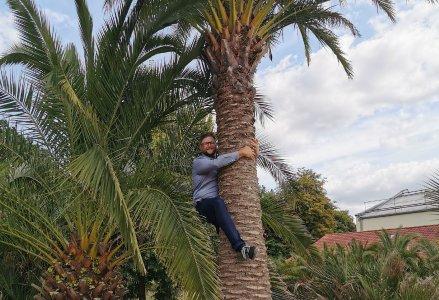 Christian Gedig auf die Palme gebracht
