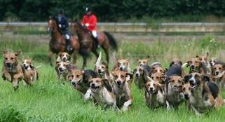 Inter: Als erster Versicherer bietet man Schutz nicht nur für brauchbarkeitsgeprüfte Jagdhunde!