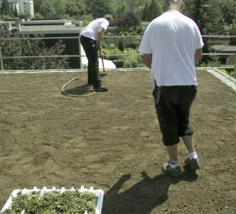 Nachdem die Dachbegrünung mit dem schichtweisen Aufbau durch Dachdecker vorbereitet ist, können die Setzlinge (im Vorder-grund) gepflanzt werden.