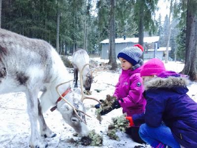 Entschleunigung in Schwedisch Lappland: Calm down mit Ice-Yoga, Elch-Watching und anderen Anglizismen