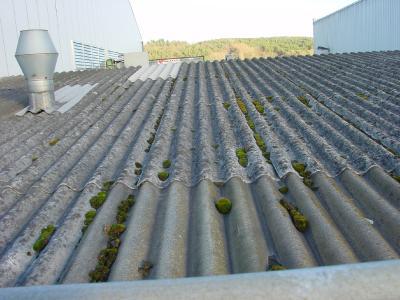 Asbesthaltige Baustoffe dürfen nicht bearbeitet werden: Selbst das Abkehren dieser Dachfläche ist verboten / Fotos: Krawczyk/HF.Redaktion