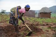 Bäuerin bei Feldarbeit (Foto: Brot für die Welt)