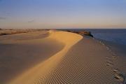 """Auf der Halbinsel """"Kurische Nehrung"""" findet man eine in Europa einmalige Dünenlandschaft vor. / Foto: Delta Tours / A. Varanka"""