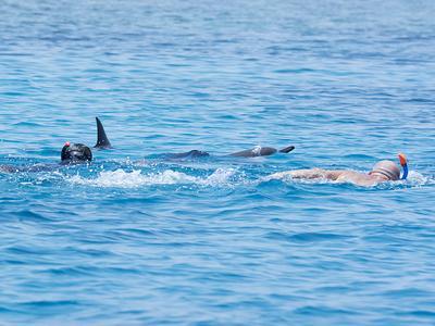 Ein Schwimmer krault auf drei ruhende Spinnerdelfine zu / Foto: S.Oehen/HEPCA