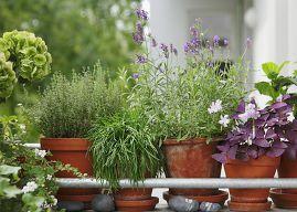 so retten sie ihre balkonpflanzen ber die urlaubszeit. Black Bedroom Furniture Sets. Home Design Ideas