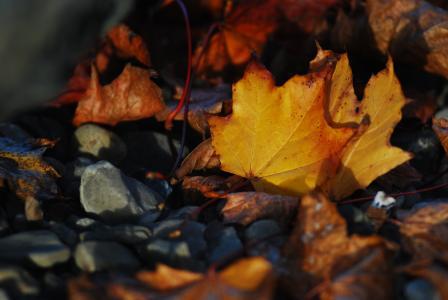 Herbstwald im Hörnerdorf Balderschwang im Allgäu