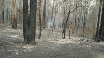Buschland in unmittelbarer Nähe des Geländes der Manning Adventist School in Tinonee, NSW