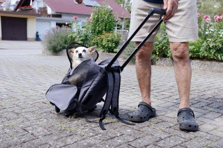 Sweetypet 2in1-Hunde-Trolley und Rucksack mit Sichtfenster, bis 20 kg, anthrazit