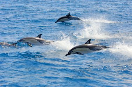 Delphin Schwimmen Bay of Plenty