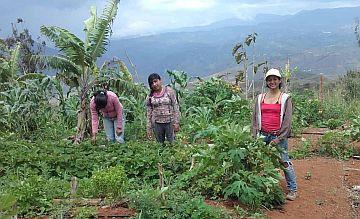 Bäuerinnen der kolumbianischen Kooperation Agroecol. Die Kooperation hat sich auf Obst und Gemüse in Bioqualität spezialisiert