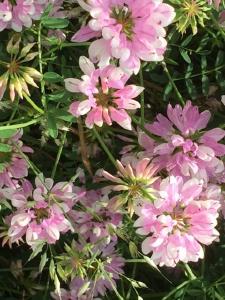 Jede Blüte ist eine Umarmung der Natur an uns. Geben wir der Natur unsere Liebe und Achtsamkeit zurück.