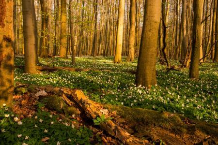 Foto: Harry Neumann/Naturschutzinitiative e.V. (NI)
