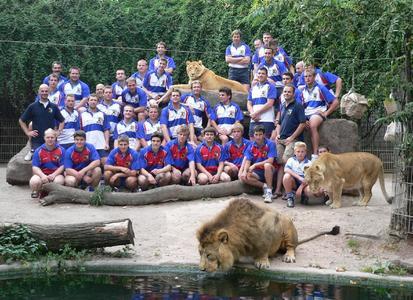 Löwen im Löwengehege