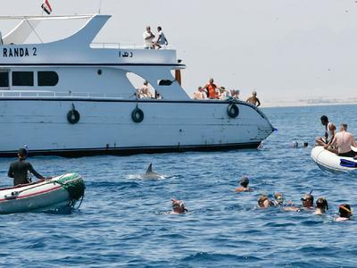 Von Touristen und Zodiacs eingekreister Delfin bei Hurghada / Foto: DWA