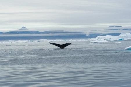 Grönland Erlebnisreise mit Travel-and-Personality