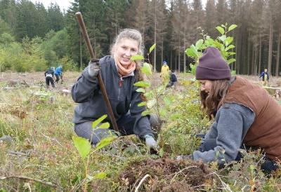 Die freiwilligen Baumpflanzerinnen Klara Fellgiebel aus Jena und Julia Kauth aus Flensburg setzen beim Bergwaldprojekt Erlen als Pionierbäume auf einer Borkenkäfer-Kahlfläche bei Braunlage