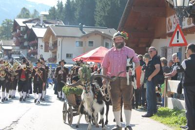Auch Goaßböcke sind mit dabei beim Almabtrieb / © Wildschönau Tourismus