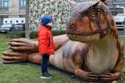 Auge in Auge mit dem Carnotaurus (c) Landesmuseum Hannover