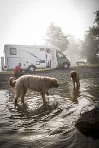 Hunde-Urlaub