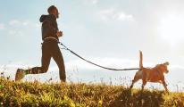 Darmbiotic: So unterstützt du die Darmflora deines Hundes