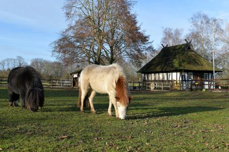 Neue Ponys. Copyright Sparkasse Bremen