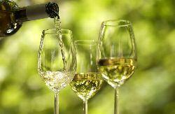 Absatzplus durch Sommerweine