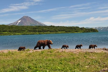 Kamtschatka Wanderreise - Größte Braunbärenpopulation weltweit