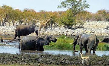 Tierische Begegnungen im unbekannten Norden Namibias