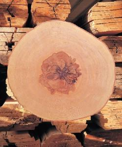 Gesundes Holz - Gesundheit  in den eigenen vier Wänden