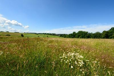 Ein Teil der artenreichen Wiesen und der Feuchtgebiete auf dem Grießing, die völlig zerstört würden. Blick von der L 307 nach Nordhofen / Foto: Harry Neumann/NI
