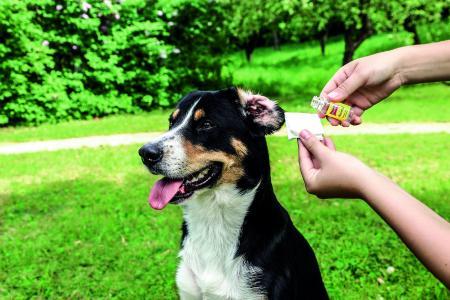 Ohrenpflege beI Ihrem Vierbeiner. Vertrauen Sie auf Ballistol Animal!