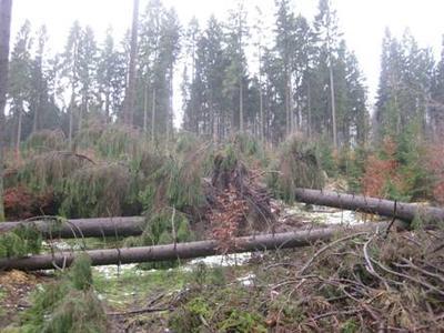 Sturmschäden im Niedersächsischen Forstamt Dassel. Die Landesforsten appellieren an alle Waldbesucher, die gesperrten Wege nicht zu betreten (Quelle: Ristau / Landesforsten)