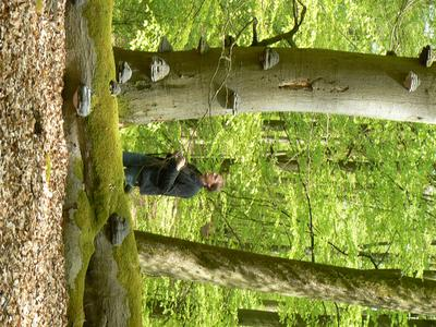 Große Artenvielfalt im Müritz-Nationalpark