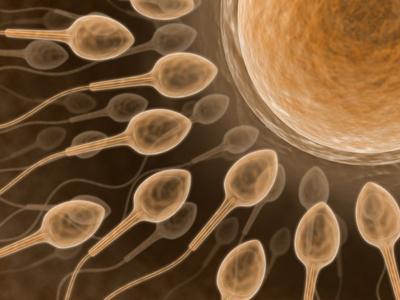 So werden Spermien zu Sprintern